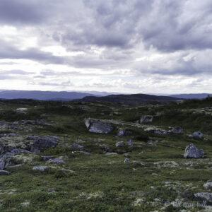 Steinblokker og lyng på Haugefjella med fjella i Telemark i bakgrunnen