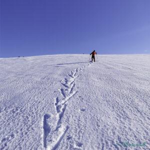 Gut går fiskebein på ski oppover fjellsida i strålande sol