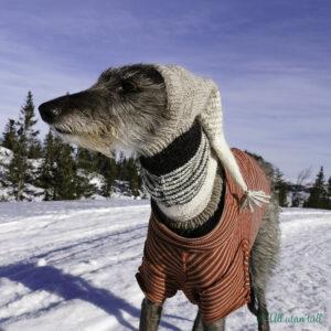 Skotsk hjortehund med raudstripete trøye og pointy greyhound hoodie i snøen. Er blå himmel og sol